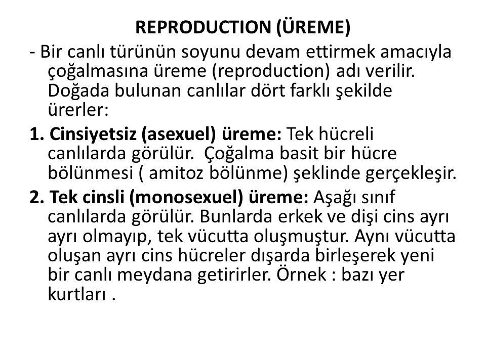 REPRODUCTION (ÜREME) - Bir canlı türünün soyunu devam ettirmek amacıyla çoğalmasına üreme (reproduction) adı verilir. Doğada bulunan canlılar dört far