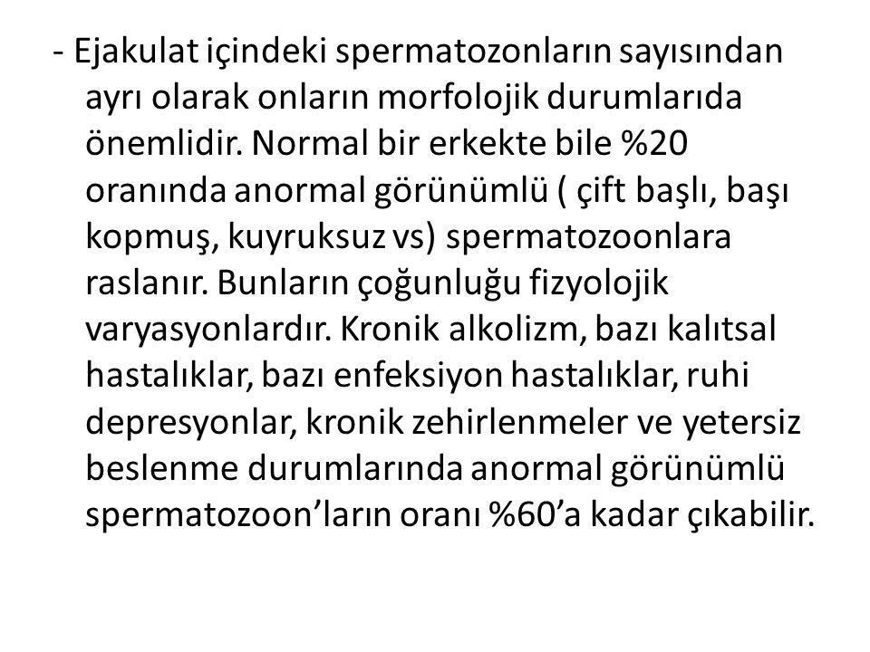 - Ejakulat içindeki spermatozonların sayısından ayrı olarak onların morfolojik durumlarıda önemlidir. Normal bir erkekte bile %20 oranında anormal gör