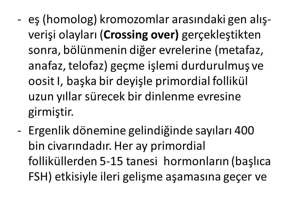 -eş (homolog) kromozomlar arasındaki gen alış- verişi olayları (Crossing over) gerçekleştikten sonra, bölünmenin diğer evrelerine (metafaz, anafaz, te