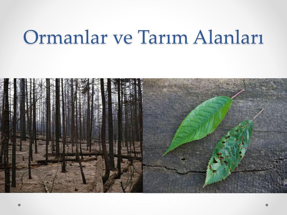 Ormanlar ve Tarım Alanları