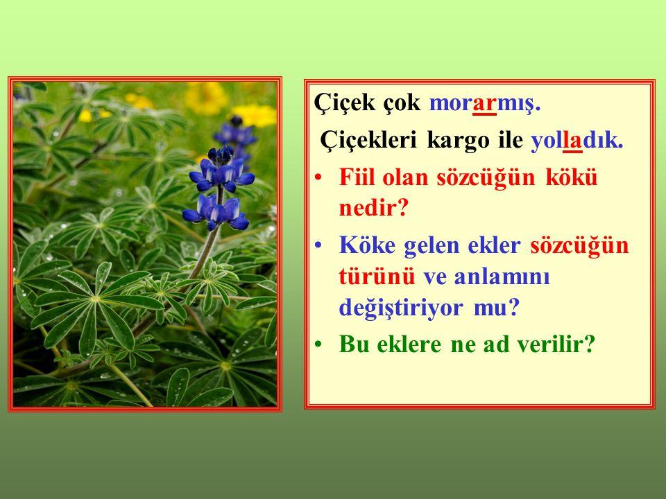 Çiçek çok morarmış.Çiçekleri kargo ile yolladık. Fiil olan sözcüğün kökü nedir.