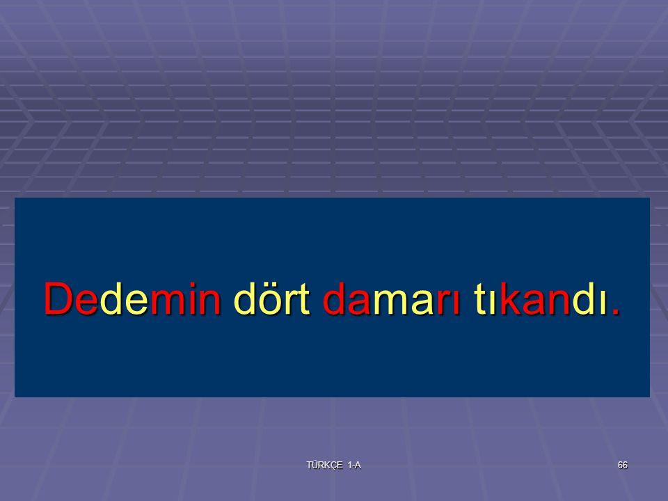 TÜRKÇE 1-A65 damar