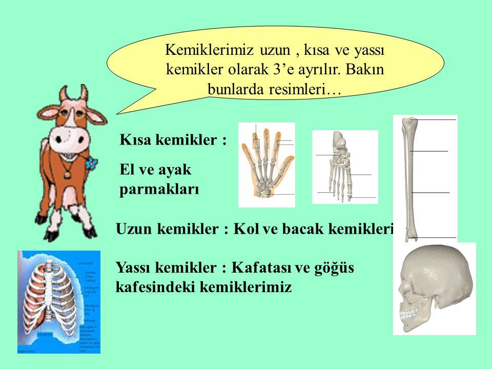 Kemiklerimiz uzun, kısa ve yassı kemikler olarak 3'e ayrılır. Bakın bunlarda resimleri… Kısa kemikler : El ve ayak parmakları Uzun kemikler : Kol ve b
