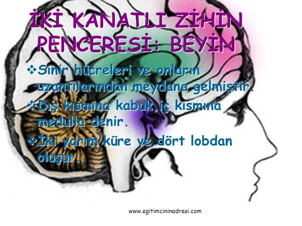 Beyin Yarım Küresindeki Loblar I.Frontal Lob: Ön kısımdadır.