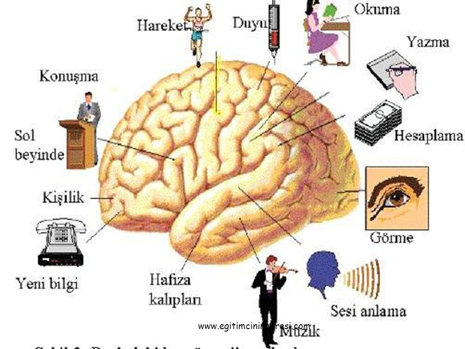 Beynimizin sağ ve sol tarafı bilgiyi farklı şekilde işler Doğrusal – Bütünsel İşlem Düzenli – Rastgele İşlem Soyut – Somut İşlem Mantıksal – İçgüdüsel İşlem Kelime – Davranış İşlemi Gerçeklere dayalı – Hayallere dayalı İşlem www.egitimcininadresi.com
