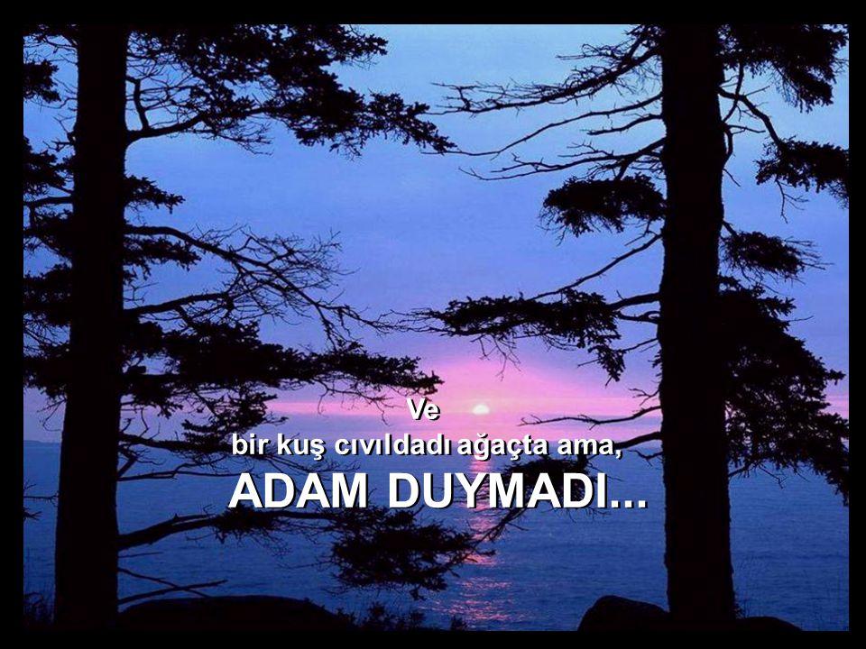 Ve bir kuş cıvıldadı ağaçta ama, ADAM DUYMADI... Ve bir kuş cıvıldadı ağaçta ama, ADAM DUYMADI...