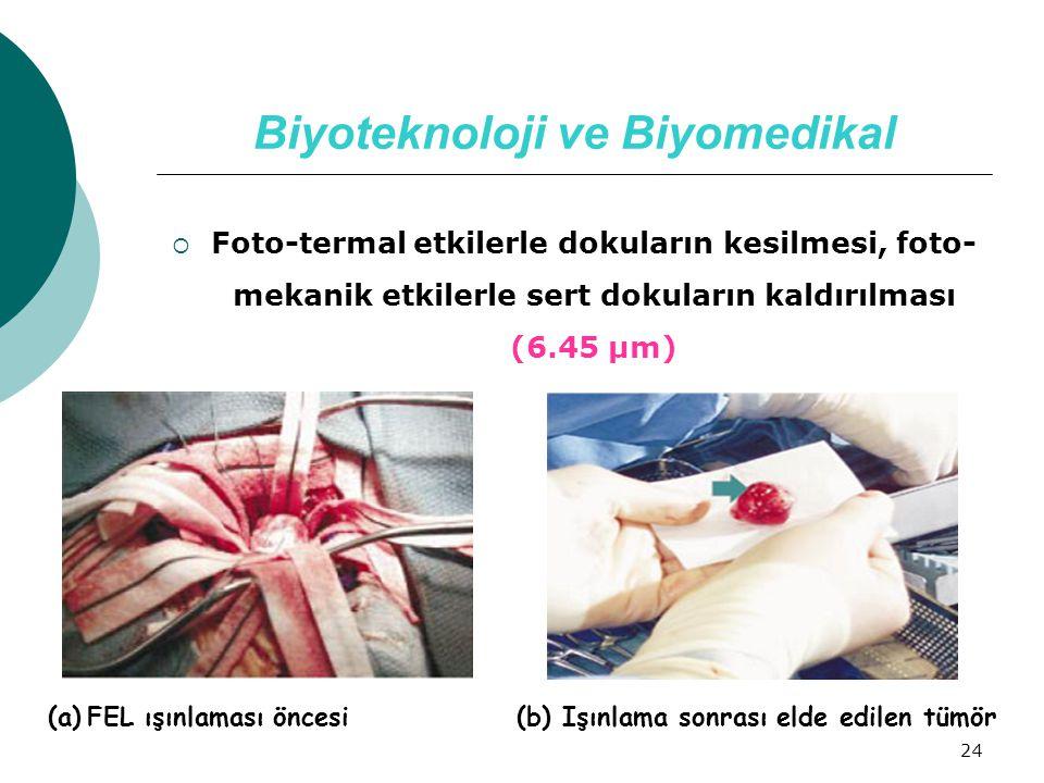 24 Biyoteknoloji ve Biyomedikal  Foto-termal etkilerle dokuların kesilmesi, foto- mekanik etkilerle sert dokuların kaldırılması (6.45 µm) (a)FEL ışın