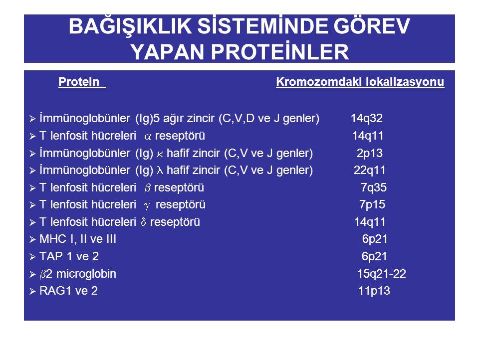 BAĞIŞIKLIK SİSTEMİNDE GÖREV YAPAN PROTEİNLER Protein Kromozomdaki lokalizasyonu  İmmünoglobünler (Ig)5 ağır zincir (C,V,D ve J genler) 14q32  T lenf
