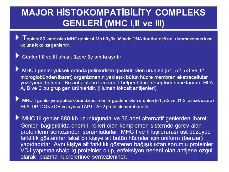MAJOR HİSTOKOMPATİBİLİTY COMPLEKS GENLERİ (MHC I,II ve III)  T oplam 80 adet olan MHC genler 4 Mb büyüklüğünde DNA dan ibaret 6 nolu kromozomun kısa