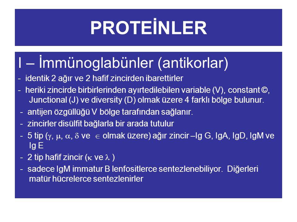 PROTEİNLER I – İmmünoglabünler (antikorlar) - identik 2 ağır ve 2 hafif zincirden ibarettirler - heriki zincirde birbirlerinden ayırtedilebilen variab