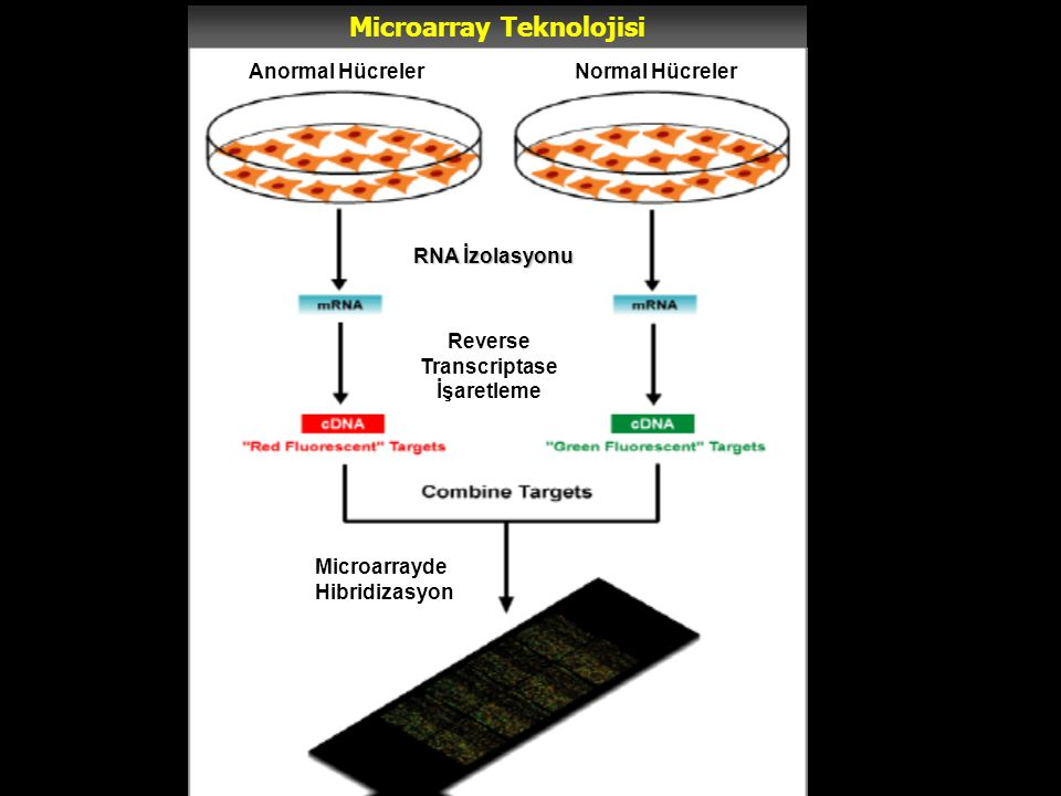 Microarray Teknolojisi Anormal HücrelerNormal Hücreler RNA İzolasyonu Reverse Transcriptase İşaretleme Microarrayde Hibridizasyon