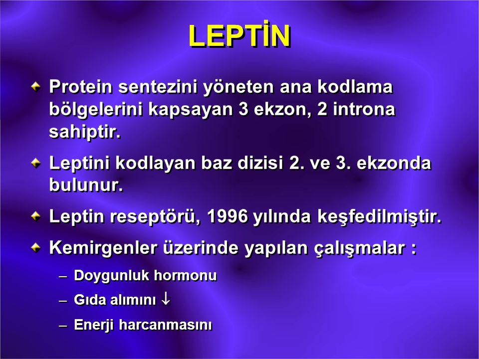 LEPTİN Protein sentezini yöneten ana kodlama bölgelerini kapsayan 3 ekzon, 2 introna sahiptir. Leptini kodlayan baz dizisi 2. ve 3. ekzonda bulunur. L