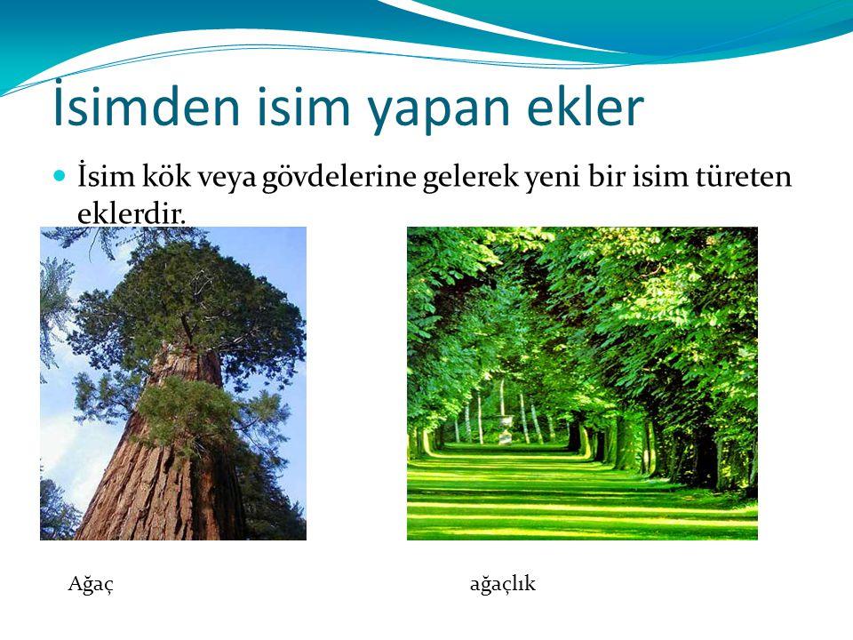 İsimden isim yapan ekler İsim kök veya gövdelerine gelerek yeni bir isim türeten eklerdir. Ağaç ağaçlık