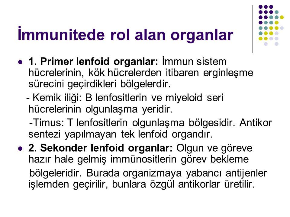 İmmunitede rol alan organlar 1. Primer lenfoid organlar: İmmun sistem hücrelerinin, kök hücrelerden itibaren erginleşme sürecini geçirdikleri bölgeler