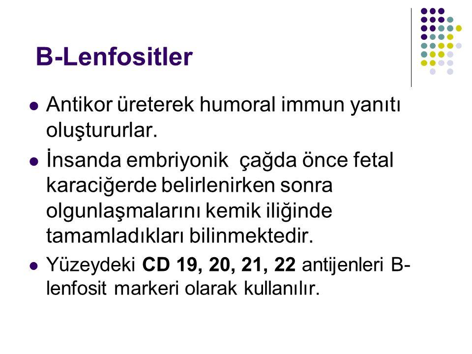 B-Lenfositler Antikor üreterek humoral immun yanıtı oluştururlar. İnsanda embriyonik çağda önce fetal karaciğerde belirlenirken sonra olgunlaşmalarını