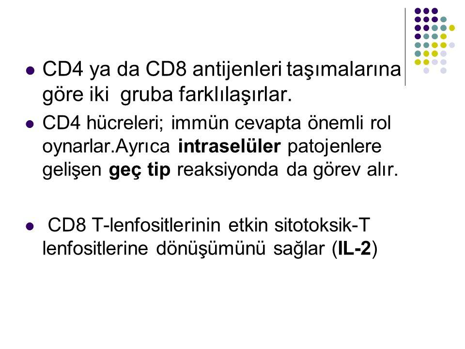 CD4 ya da CD8 antijenleri taşımalarına göre iki gruba farklılaşırlar. CD4 hücreleri; immün cevapta önemli rol oynarlar.Ayrıca intraselüler patojenlere