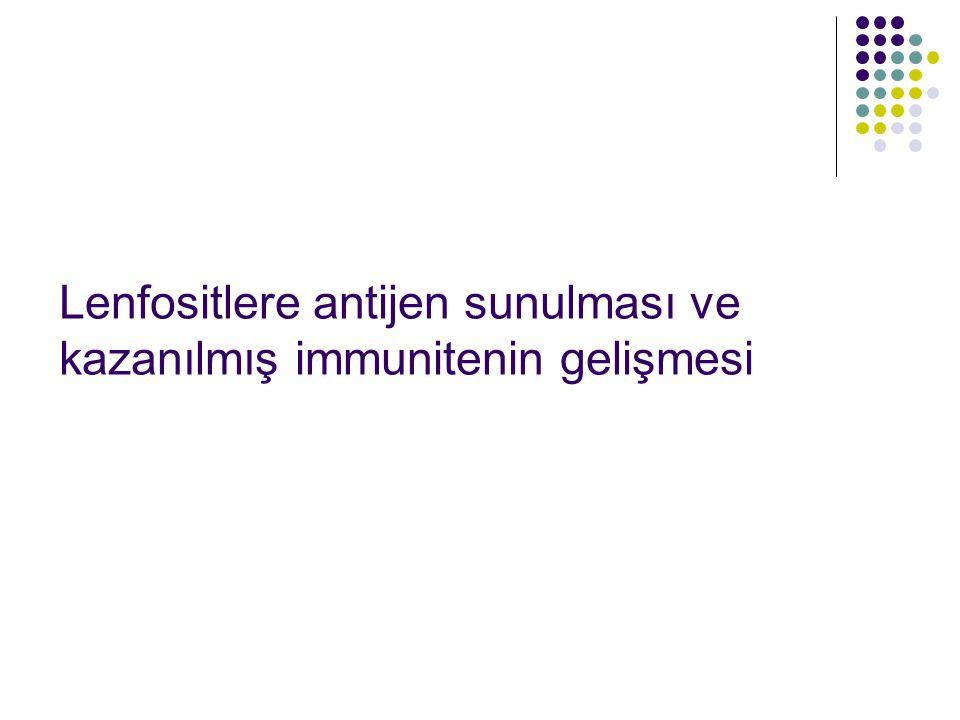 Lenfositlere antijen sunulması ve kazanılmış immunitenin gelişmesi