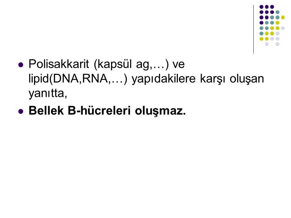 Polisakkarit (kapsül ag,…) ve lipid(DNA,RNA,…) yapıdakilere karşı oluşan yanıtta, Bellek B-hücreleri oluşmaz.