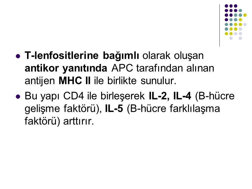 T-lenfositlerine bağımlı olarak oluşan antikor yanıtında APC tarafından alınan antijen MHC II ile birlikte sunulur. Bu yapı CD4 ile birleşerek IL-2, I