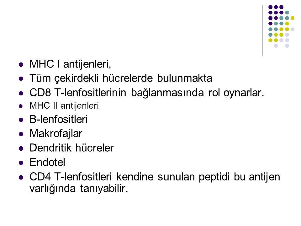 MHC I antijenleri, Tüm çekirdekli hücrelerde bulunmakta CD8 T-lenfositlerinin bağlanmasında rol oynarlar. MHC II antijenleri B-lenfositleri Makrofajla