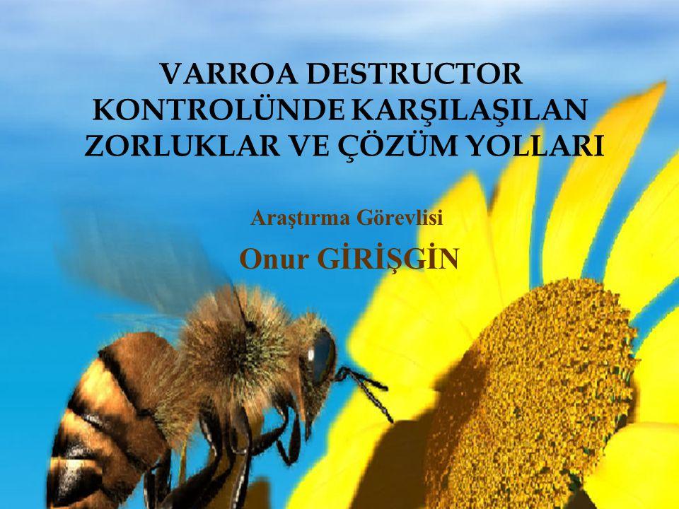 Avrupa bal arısı X Apis mellifera carnica Avrupa bal arısı X Apis mellifera capensis Burada amaç melez ırkın yavru gözünün kapalılık süresin kısaltarak daha az nesil Varroa oluşturmaktır