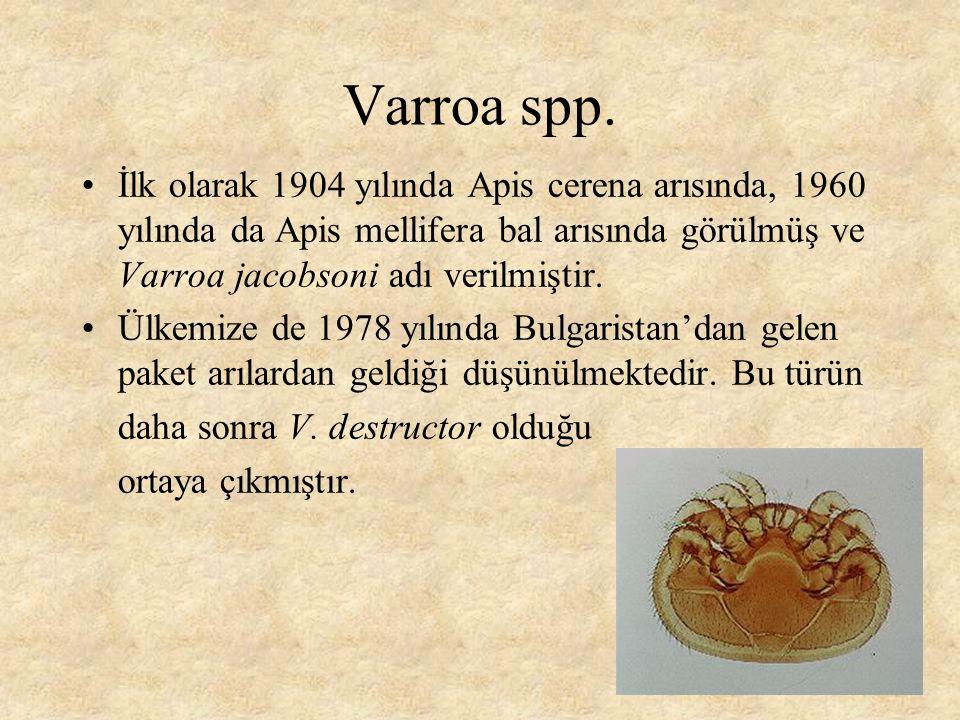 Varroa destructor Son yıllarda Varroa taksonomisi, morfolojisi ve mt-DNA çalışmaları sonucunda Oudemans tarafından yıllarca V.