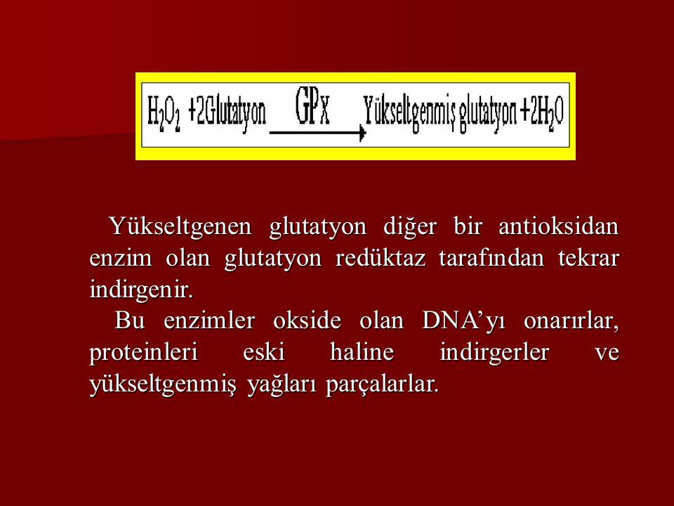 Yükseltgenen glutatyon diğer bir antioksidan enzim olan glutatyon redüktaz tarafından tekrar indirgenir. Yükseltgenen glutatyon diğer bir antioksidan