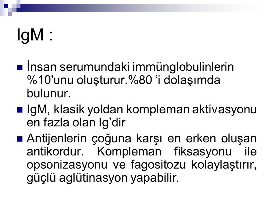 IgM : İnsan serumundaki immünglobulinlerin %10 unu oluşturur.%80 'i dolaşımda bulunur.