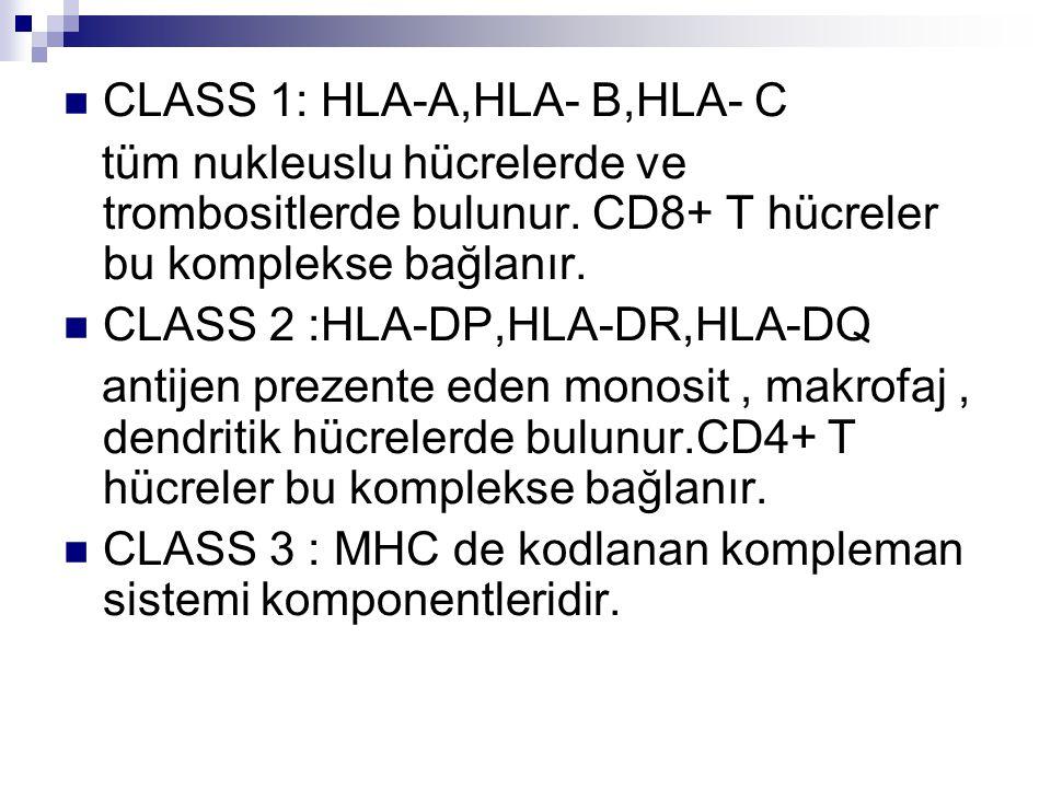 CLASS 1: HLA-A,HLA- B,HLA- C tüm nukleuslu hücrelerde ve trombositlerde bulunur.