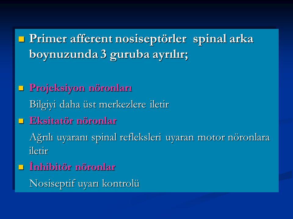 Primer afferent nosiseptörler spinal arka boynuzunda 3 guruba ayrılır; Primer afferent nosiseptörler spinal arka boynuzunda 3 guruba ayrılır; Projeksiyon nöronları Projeksiyon nöronları Bilgiyi daha üst merkezlere iletir Bilgiyi daha üst merkezlere iletir Eksitatör nöronlar Eksitatör nöronlar Ağrılı uyaranı spinal refleksleri uyaran motor nöronlara iletir Ağrılı uyaranı spinal refleksleri uyaran motor nöronlara iletir İnhibitör nöronlar İnhibitör nöronlar Nosiseptif uyarı kontrolü Nosiseptif uyarı kontrolü Primer afferent nosiseptörler spinal arka boynuzunda 3 guruba ayrılır; Primer afferent nosiseptörler spinal arka boynuzunda 3 guruba ayrılır; Projeksiyon nöronları Projeksiyon nöronları Bilgiyi daha üst merkezlere iletir Bilgiyi daha üst merkezlere iletir Eksitatör nöronlar Eksitatör nöronlar Ağrılı uyaranı spinal refleksleri uyaran motor nöronlara iletir Ağrılı uyaranı spinal refleksleri uyaran motor nöronlara iletir İnhibitör nöronlar İnhibitör nöronlar Nosiseptif uyarı kontrolü Nosiseptif uyarı kontrolü