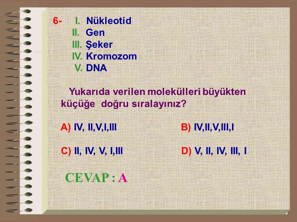 6- I. Nükleotid II. Gen III. Şeker IV. Kromozom V. DNA Yukarıda verilen molekülleri büyükten küçüğe doğru sıralayınız? A) IV, II,V,I,III B) IV,II,V,II