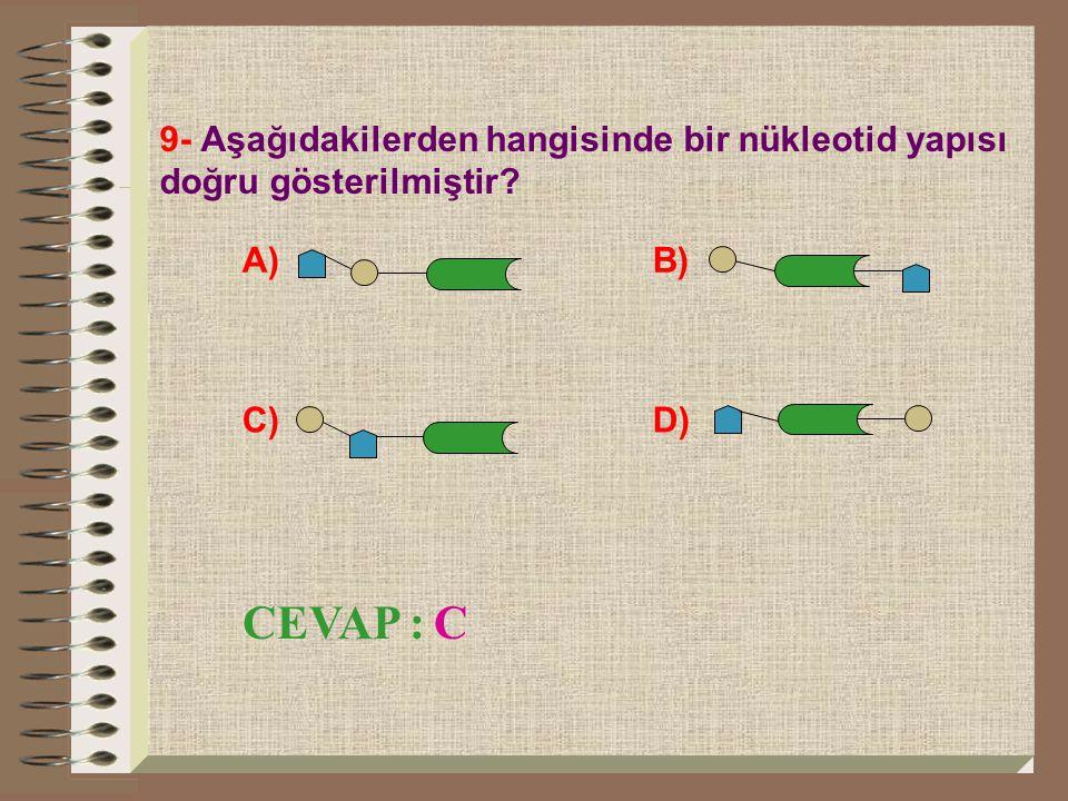 9- Aşağıdakilerden hangisinde bir nükleotid yapısı doğru gösterilmiştir? A) B) C) D) CEVAP : C