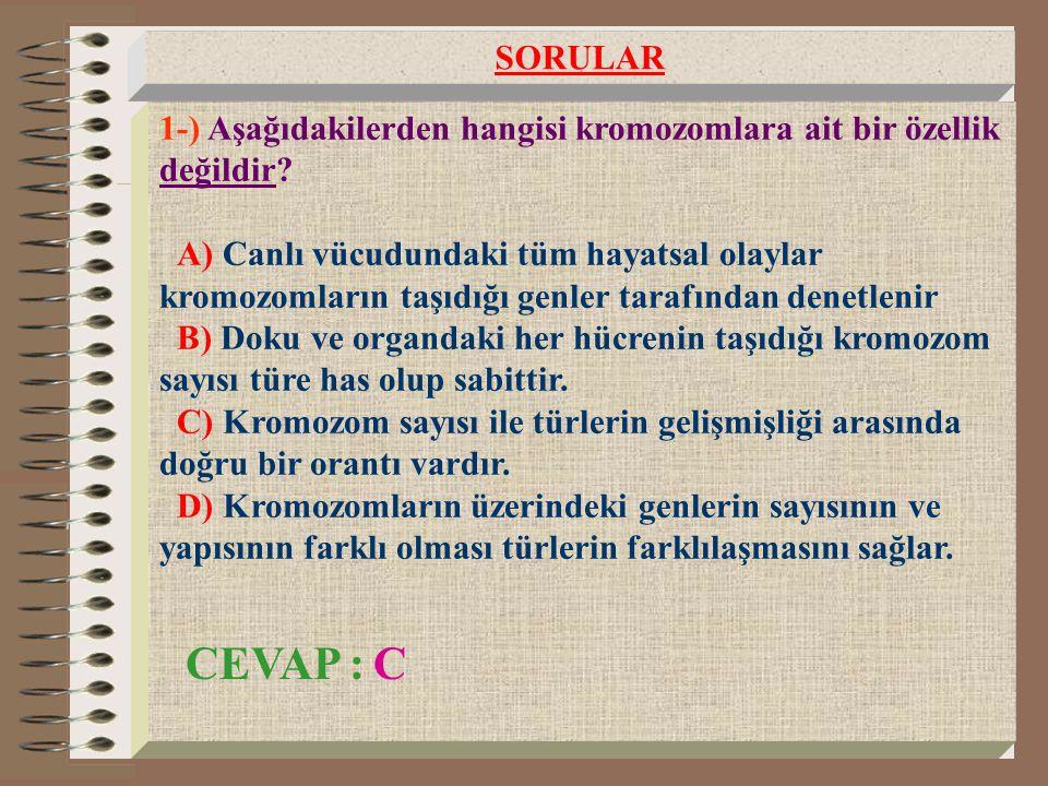 1-) Aşağıdakilerden hangisi kromozomlara ait bir özellik değildir? A) Canlı vücudundaki tüm hayatsal olaylar kromozomların taşıdığı genler tarafından
