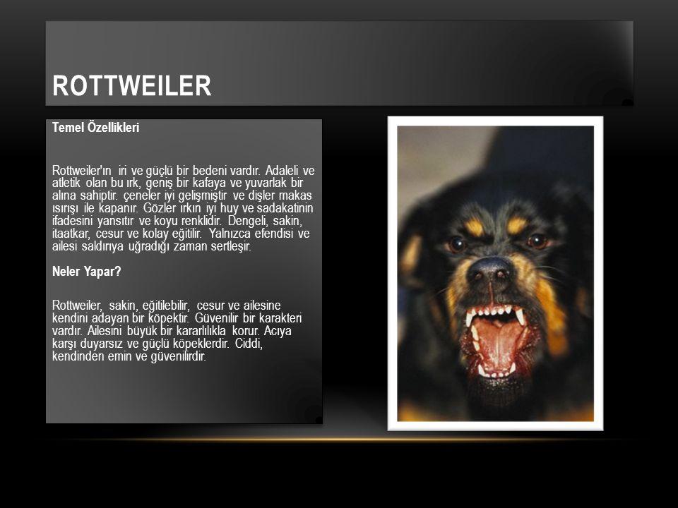 Temel Özellikleri Rottweiler'ın iri ve güçlü bir bedeni vardır. Adaleli ve atletik olan bu ırk, geniş bir kafaya ve yuvarlak bir alına sahiptir. çenel