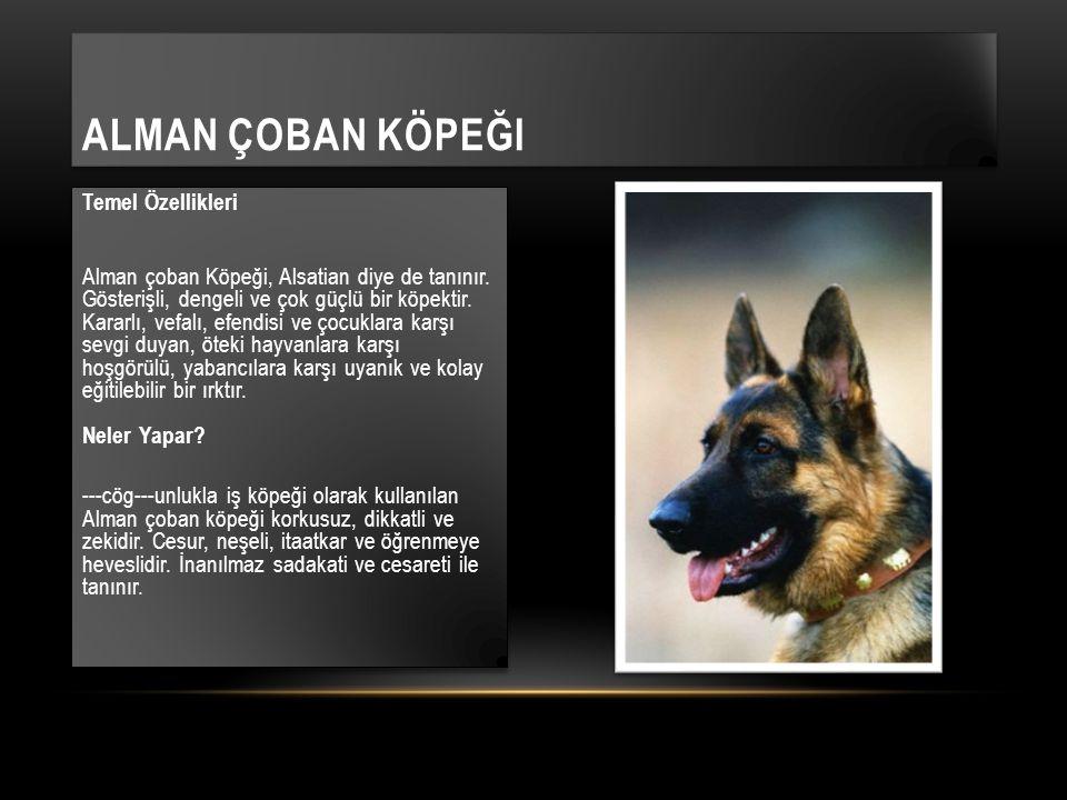 Temel Özellikleri Alman çoban Köpeği, Alsatian diye de tanınır. Gösterişli, dengeli ve çok güçlü bir köpektir. Kararlı, vefalı, efendisi ve çocuklara