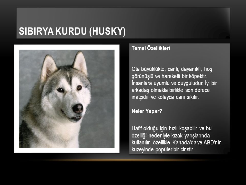 Temel Özellikleri Ota büyüklükte, canlı, dayanıklı, hoş görünüşlü ve hareketli bir köpektir.