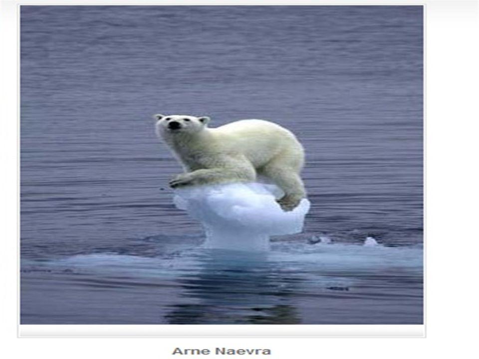 Küresel Isınmanın Etkileri  Küresel  Küresel ısınma en büyük etkisini 21.