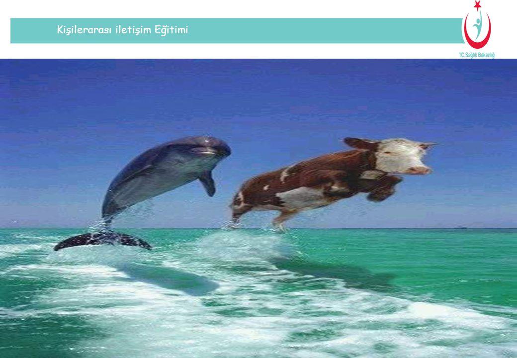 Kişilerarası iletişim Eğitimi Suyun üzerinden atlayan iki yunusa çok dikkatli bir şekilde bakınız.