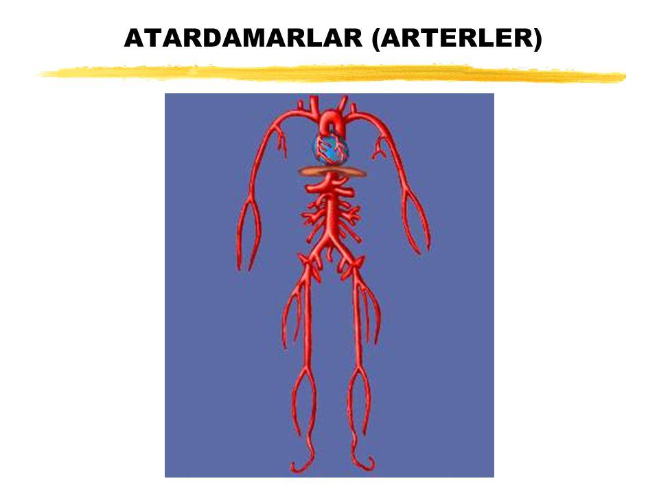 ATARDAMARLAR (ARTERLER)