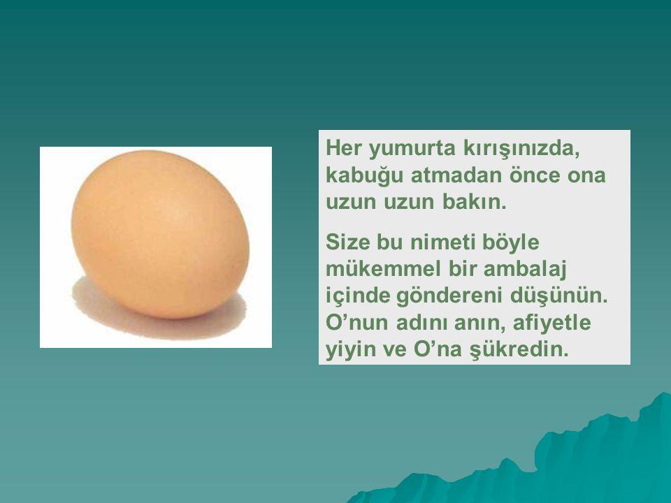 Her yumurta kırışınızda, kabuğu atmadan önce ona uzun uzun bakın.