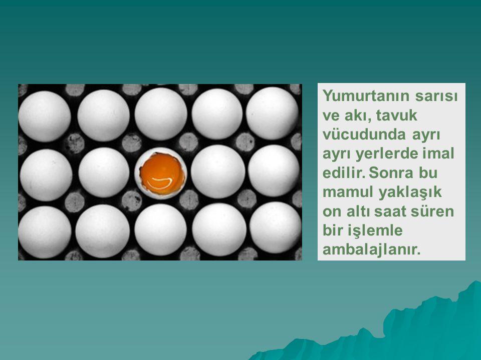 Yumurtanın sarısı ve akı, tavuk vücudunda ayrı ayrı yerlerde imal edilir.