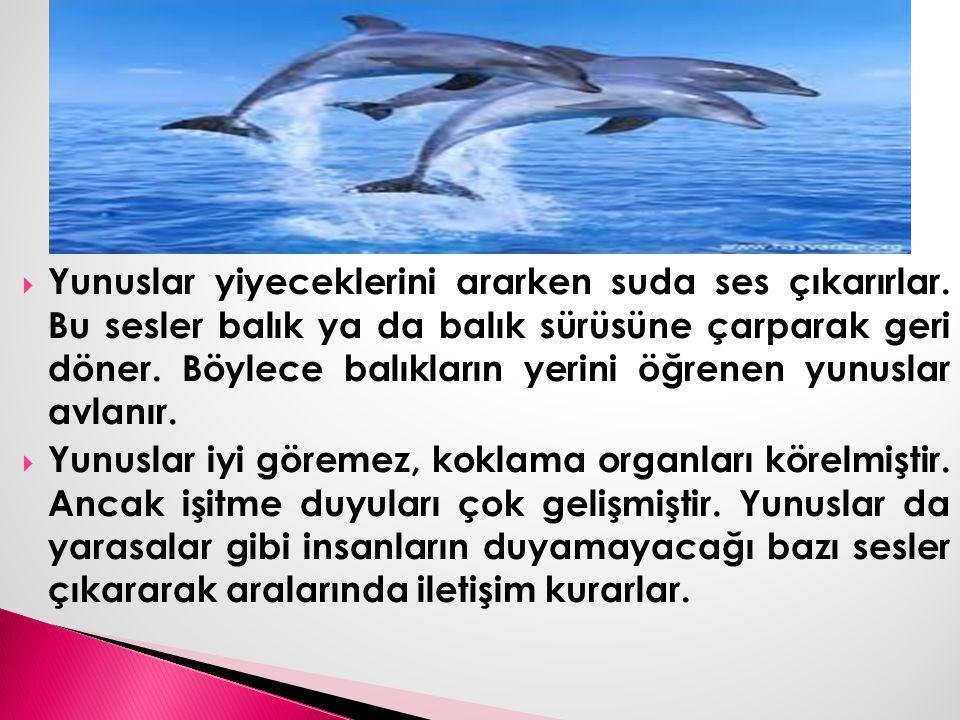  Yunuslar yiyeceklerini ararken suda ses çıkarırlar. Bu sesler balık ya da balık sürüsüne çarparak geri döner. Böylece balıkların yerini öğrenen yunu