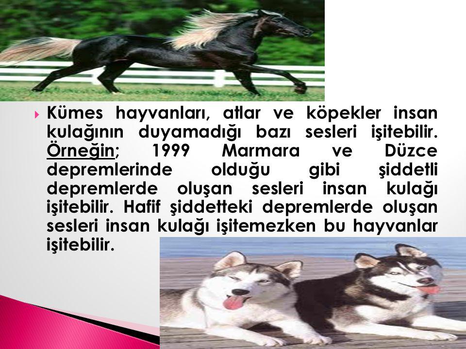  Kümes hayvanları, atlar ve köpekler insan kulağının duyamadığı bazı sesleri işitebilir. Örneğin; 1999 Marmara ve Düzce depremlerinde olduğu gibi şid
