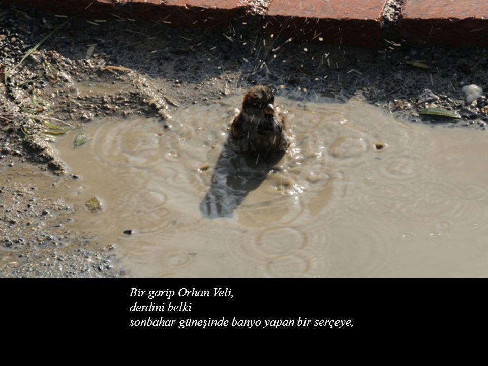 Bir garip Orhan Veli, derdini belki sonbahar güneşinde banyo yapan bir serçeye,