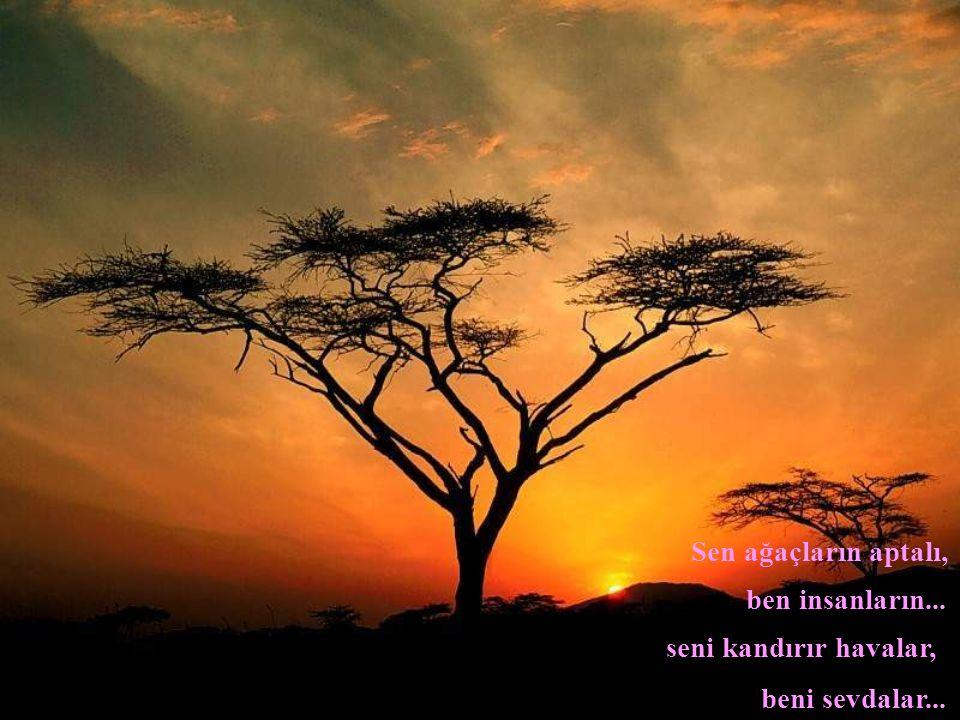 Sen ağaçların aptalı, ben insanların... seni kandırır havalar, beni sevdalar...