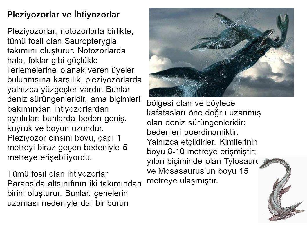 Pleziyozorlar ve İhtiyozorlar Pleziyozorlar, notozorlarla birlikte, tümü fosil olan Sauropterygia takımını oluşturur. Notozorlarda hala, foklar gibi g