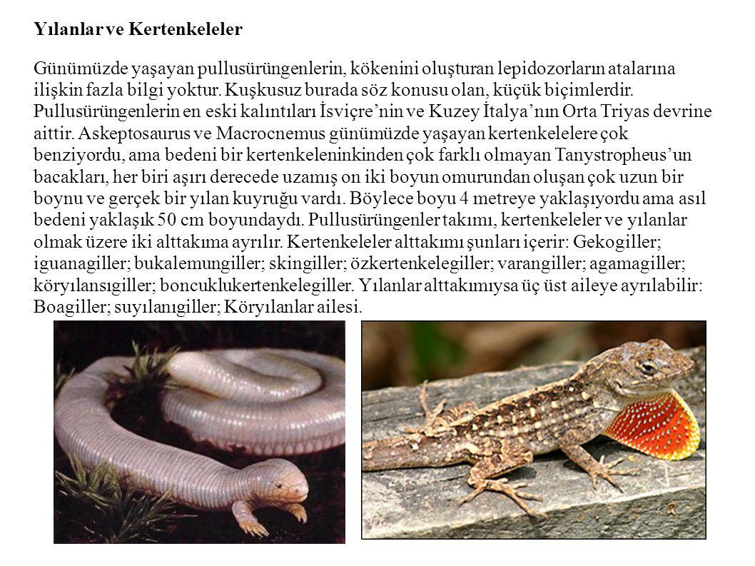 Yılanlar ve Kertenkeleler Günümüzde yaşayan pullusürüngenlerin, kökenini oluşturan lepidozorların atalarına ilişkin fazla bilgi yoktur. Kuşkusuz burad
