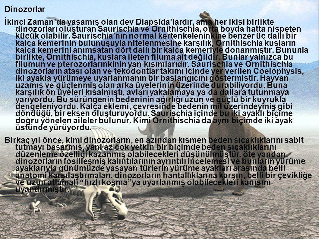 Dinozorlar İkinci Zaman'da yaşamış olan dev Diapsida'lardır, ama her ikisi birlikte dinozorları oluşturan Saurischia ve Ornithischia, orta boyda hatta