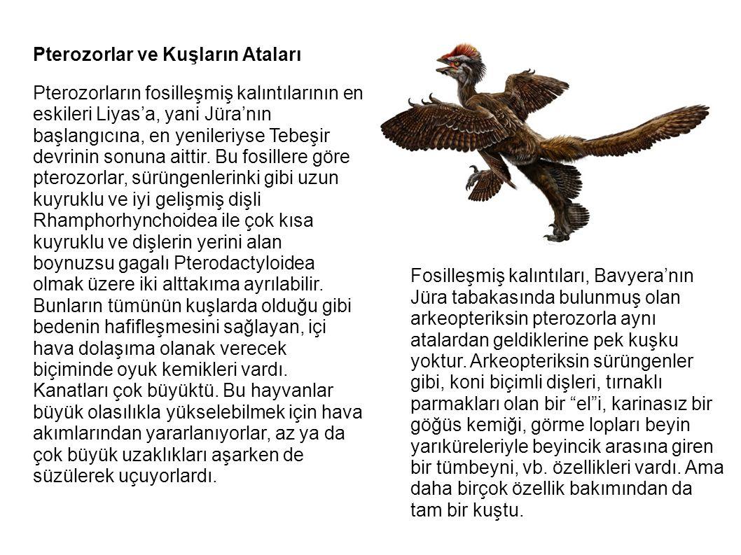 Pterozorlar ve Kuşların Ataları Pterozorların fosilleşmiş kalıntılarının en eskileri Liyas'a, yani Jüra'nın başlangıcına, en yenileriyse Tebeşir devri