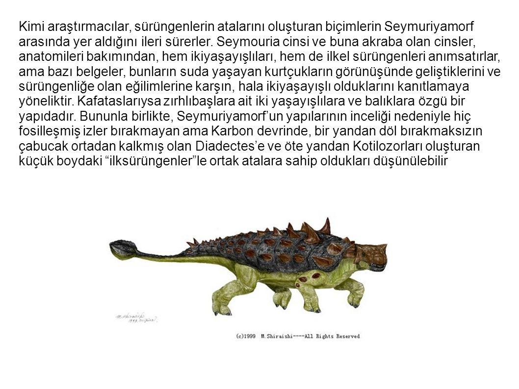 Kimi araştırmacılar, sürüngenlerin atalarını oluşturan biçimlerin Seymuriyamorf arasında yer aldığını ileri sürerler. Seymouria cinsi ve buna akraba o